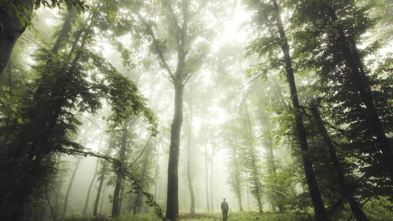 Satprem: Úton az emberfölötti felé