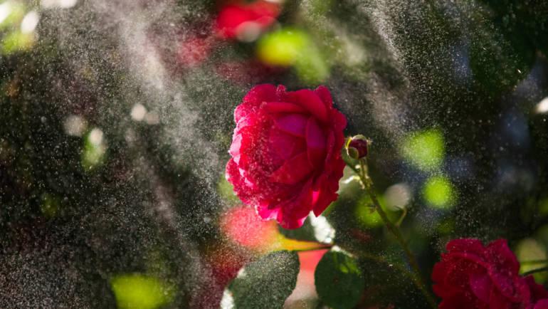Gál Katalin: Rózsakert a sivatagban, fényjátékok angyalhangon